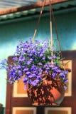 Potenciômetro de flor rústico Fotografia de Stock Royalty Free
