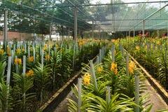 Potenciômetro de flor tropical em Chu Chi Tunnels Area imagem de stock royalty free