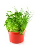 Potenciômetro vermelho com ervas diferentes Foto de Stock Royalty Free