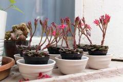 Potenciômetros brancos com flores cor-de-rosa em um estilo branco do vintage do peitoril imagem de stock