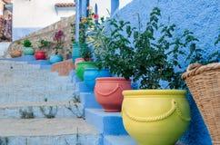 Potenciômetros coloridos das plantas fotografia de stock royalty free