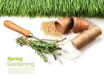 Potenciômetros da grama, das sementes, do cabo e da turfa para a mola Imagem de Stock