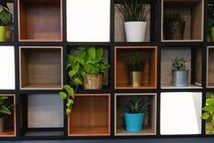 Potenciômetros da planta colocados na prateleira de madeira unida à parede fotografia de stock royalty free