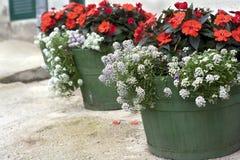 Potenciômetros de flor Fotografia de Stock Royalty Free