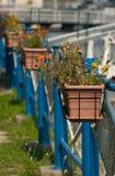 Potenciômetros de flor fotografia de stock