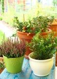 Potenciômetros de flor ao ar livre Imagens de Stock Royalty Free