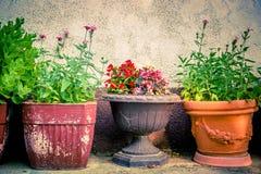 Potenciômetros de flor coloridos do vintage Fotos de Stock