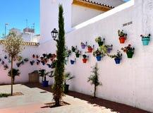 Potenciômetros de flor coloridos em uma linha Imagens de Stock