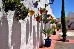 Potenciômetros de flor coloridos em uma linha Fotos de Stock