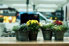 Potenciômetros de flor coloridos fora Foto de Stock Royalty Free