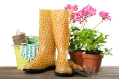 Potenciômetros de flor com flores e os utensílios de jardinagem sobre fotografia de stock