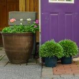 Potenciômetros de flor do país de Amish roxos ou porta violeta em Lancaster, PA foto de stock