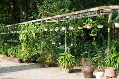 Potenciômetros de flor em um berçário da planta Imagens de Stock