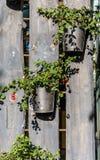 Potenciômetros de flor em uma cerca de madeira, decoração da flor, placa de madeira Fotos de Stock Royalty Free