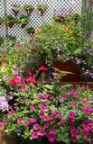 Potenciômetros de florescência fotos de stock royalty free