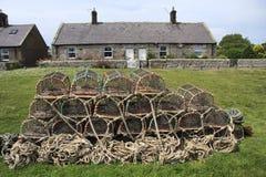 Potenciômetros e casas de campo de lagosta Fotos de Stock Royalty Free