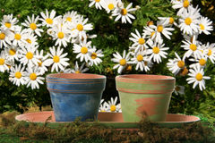 Potenciômetros florais em margaridas fotografia de stock royalty free