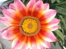 Potenciômetro bonito do jardim da planta verde da natureza da flor Imagens de Stock Royalty Free