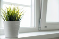 Potenciômetro branco com grama verde na soleira Foto de Stock Royalty Free