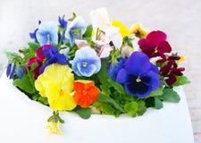 Potenciômetro branco com Viola Pansy Flowers Foto de Stock