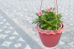 Potenciômetro com flores imagens de stock