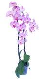 Potenciômetro com ramo cor-de-rosa da orquídea Imagens de Stock