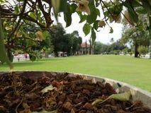 Potenciômetro da planta com grama verde Imagens de Stock Royalty Free
