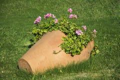 Potenciômetro de argila com as flores de florescência do gerânio Imagem de Stock Royalty Free