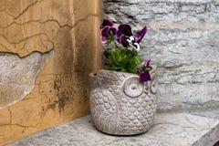 Potenciômetro de flor da coruja Imagens de Stock Royalty Free