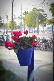 Potenciômetro de flor em uma rua Foto de Stock