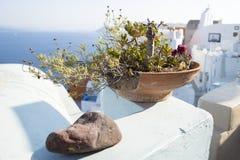 Potenciômetro de flor ensolarado em oia, santorini, greece Fotos de Stock Royalty Free