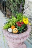 Potenciômetro e abóbora de flor Foto de Stock Royalty Free