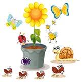 Potenciômetro e insetos da planta Foto de Stock Royalty Free