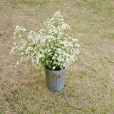 Potenciômetro inoxidável das flores brancas do estilo do vintage no backgroun da grama seca Imagens de Stock Royalty Free