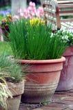 Potenciômetro que jardina no terraço - erva e flor Fotografia de Stock