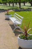Potenciômetros brancos ornamentado do banco e de flor Imagem de Stock Royalty Free