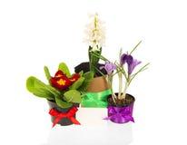 Potenciômetros com as flores Imagem de Stock