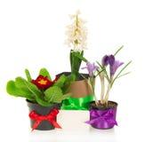 Potenciômetros com as flores, decoradas pela fita Fotografia de Stock Royalty Free