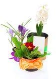 Potenciômetros com as flores, decoradas pelo cartão da fita Foto de Stock