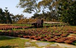 Potenciômetros com as plantas Fotografia de Stock