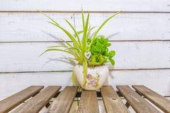 Potenciômetros com flores em uma madeira branca do fundo Fotos de Stock Royalty Free