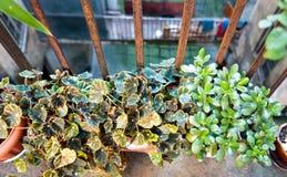 Potenciômetros com plantas Fotos de Stock Royalty Free