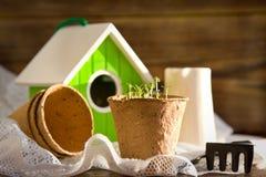Potenciômetros da turfa, pássaro-casa, plântulas e ferramentas de jardim Foto de Stock Royalty Free