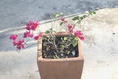 Potenciômetros de argila das flores Fotos de Stock Royalty Free