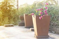 Potenciômetros de argila das flores Imagens de Stock Royalty Free