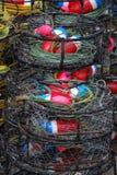 Potenciômetros de caranguejo Fotografia de Stock