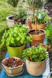 Potenciômetros de flor Imagens de Stock Royalty Free