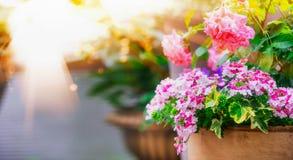 Potenciômetros de flor bonitos do pátio no balcão na luz solar fotografia de stock royalty free