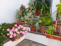 Potenciômetros de flor coloridos fora da casa branca Imagem de Stock