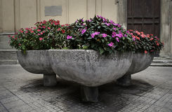 Potenciômetros de flor da rua com as flores vermelhas e roxas Fotos de Stock